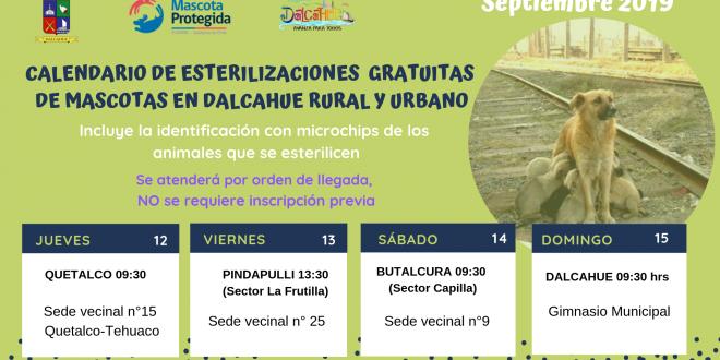 Operativos de Esterilización en Dalcahue