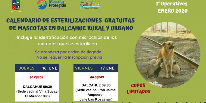 La I Municipalidad de Dalcahue invita a la comunidad de Dalcahue a participar de los operativos de esterilización gratuita de mascotas (perros y gatos, machos y hembras). Los próximos operativos se llevarán a cabo la siguiente semana. La programación es la siguiente: