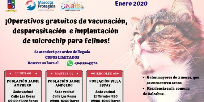 Operativos gratuitos de vacunación, desparasitación e implantación de microchips para felinos en Dalcahue